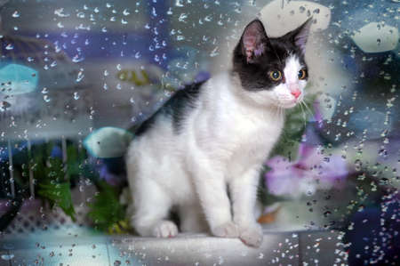 Teen kitten lilac background with flowers photo