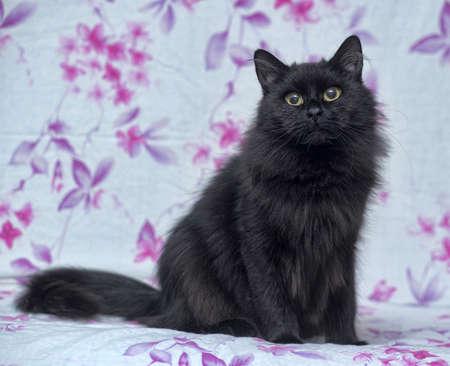 York Chocolate Cat photo