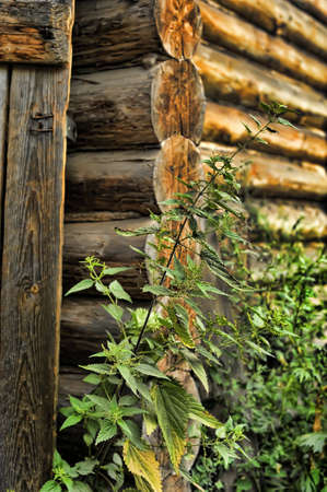 nettles in a wooden house photo