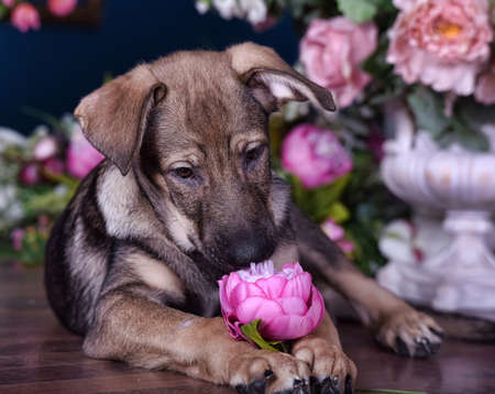 Cute puppy crossbreed lying on the floor with flowers. photo