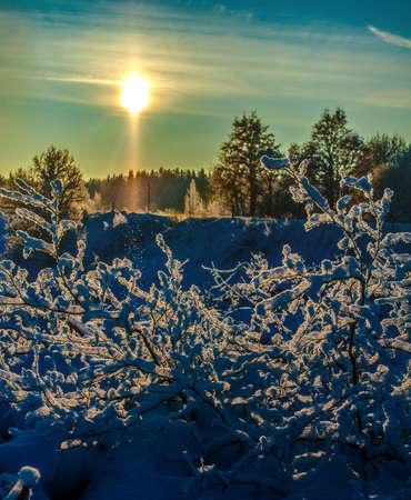 Snow-covered tree branches illuminated by the sun. photo