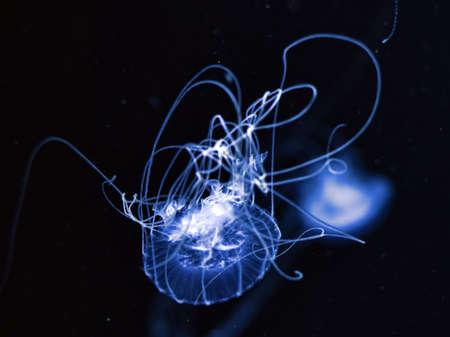 jelly fish: jelly fish