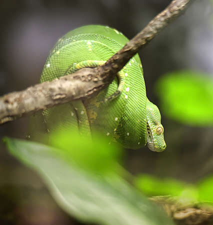 limbless: A green snake at the zoo.