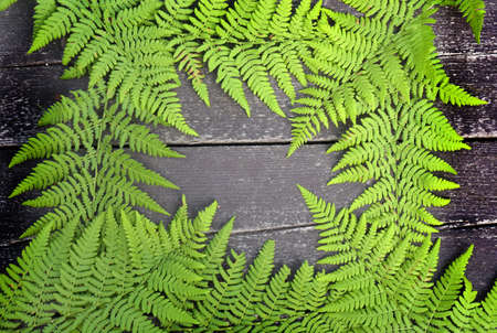 leafage: Fern frame on a wooden background.