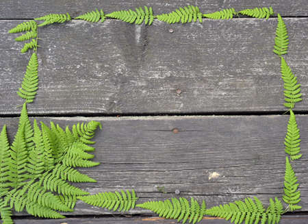 ladyfly: Fern frame on a wooden background.