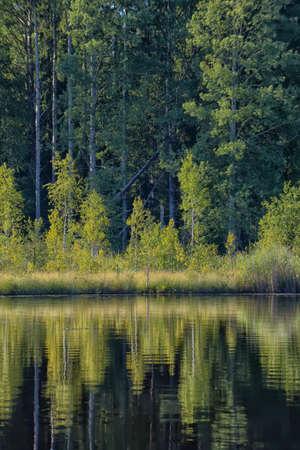 narew: Landscape river clouds blue sky green trees.