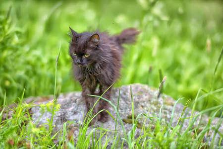 emaciated: Very old sick emaciated cat