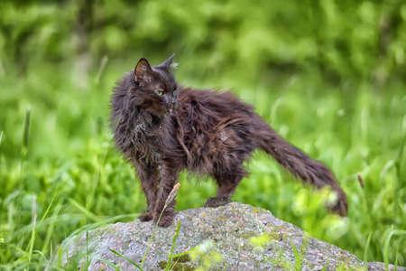 catlike: Very old sick emaciated cat