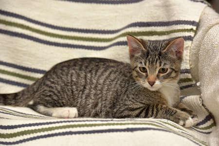 Tabby kitten Teen 3 months.