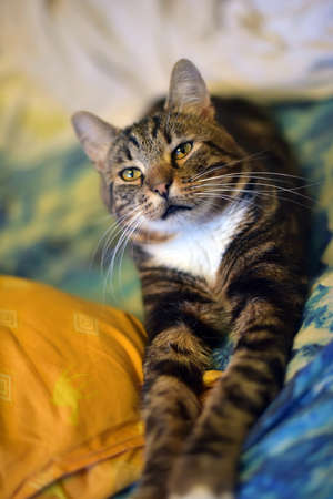 Chic striped cat is stretching his front paws. Stock Photo