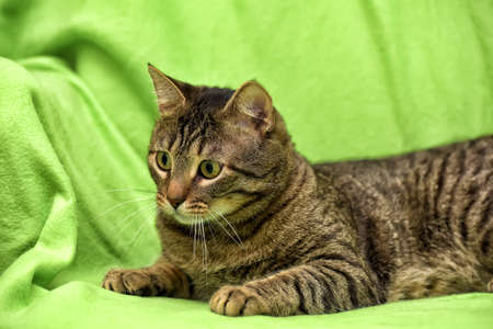 Beautiful tabby cat on a green background. Stock Photo