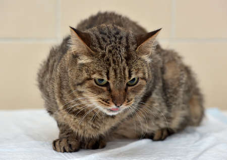 A grey striped cat.