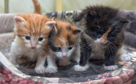Three charming little kitten together.