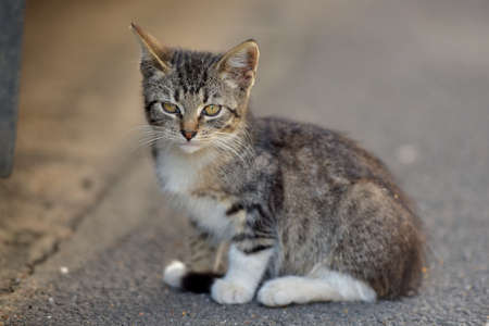 grey eyed: Tabby kitten in the street on the pavement.