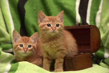 Two red kitten and box on a green background. Stock Photo