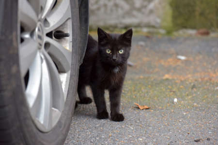 stray: Black kitten in the street next to the wheel of a parked car. Stock Photo