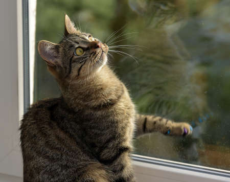 Young handsome tabby cat at home on a window sill.