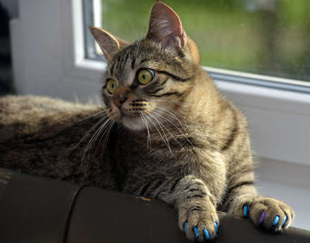 Manicure for cats, caps on the claws.
