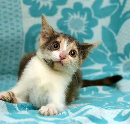 grey eyed: A small short-haired kitten with a stunned look Stock Photo