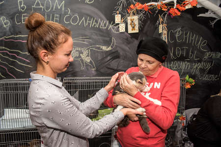 Exhibition and distribution of cats from a shelter, Second Chance, St. Petersburg, Russia. Editorial