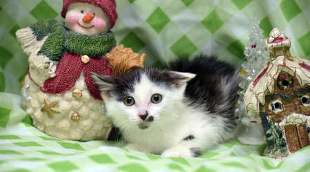mischievious: Small kitten near toy snowman and Christmas decorations in the house. Stock Photo