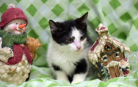 Small kitten near toy snowman and Christmas decorations in the house. Stock Photo