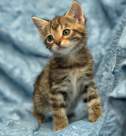 Cute kitten on a blue background.