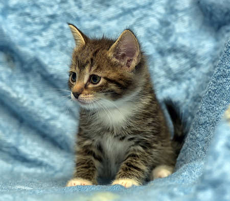 sleek: Cute kitten on a blue background.