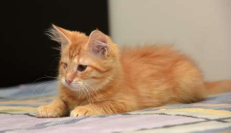 Ginger el gatito de un solo ojo. Foto de archivo