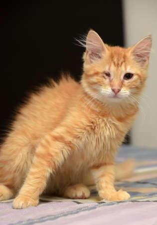 Ginger the one-eyed kitten. Stock Photo