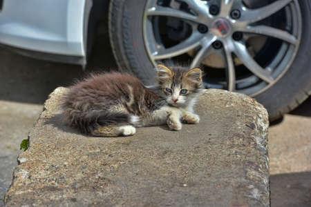 Homeless kitten on the street