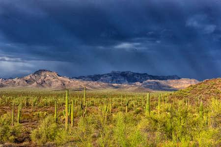 Cactus park before rain under a stormy sky
