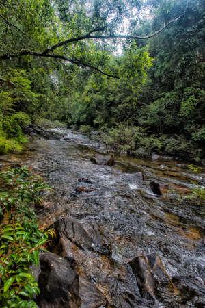 Walking trail in Thai dark tropical forest, Mu Koh Chang National Park, Chang island, Thailand. Path to the Khlong Phlu waterfall Stock Photo