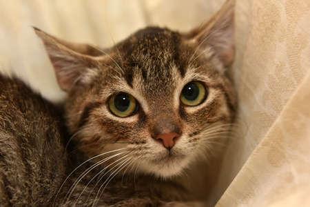 frightened tabby kitten on a light background Stock Photo