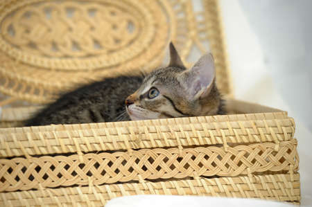 camargue: the kitten is hiding in a caged box