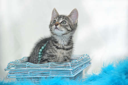 striped kitten on a light background with blue beads