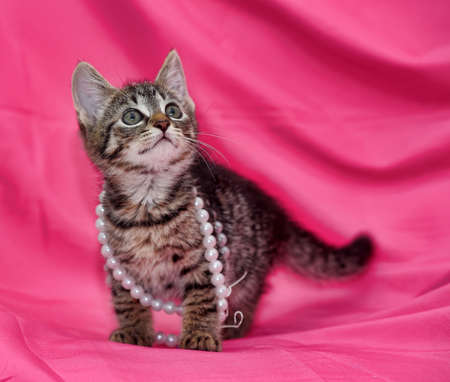 true born: striped kitten on a pink background with white beads Stock Photo
