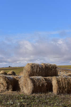 Round bales of hay lined up along a field Stock Photo
