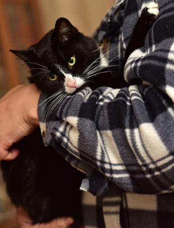 zwart met witte aanhankelijke kat op handen