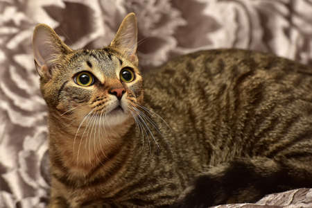 young striped brown cat on the sofa