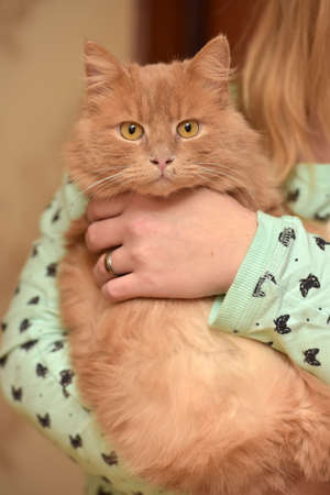 cute red cat on female hands