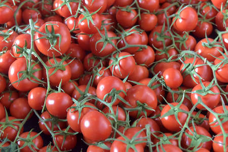 tomatoes on ay branch background Stock Photo