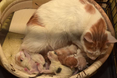 female feline cat give birth