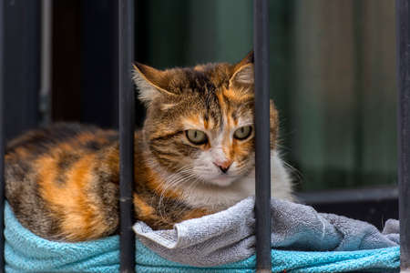 a homeless cat on the street behind bars, Stock Photo