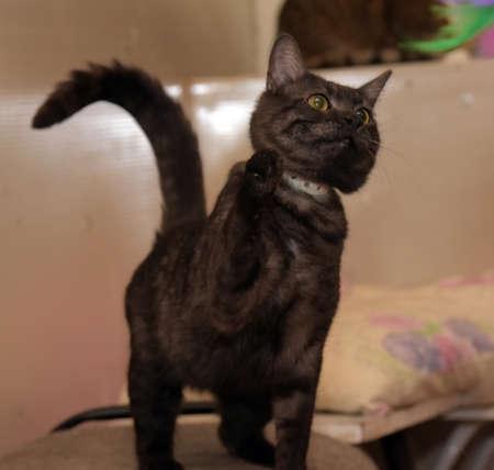 black smoky cat with orange eyes Stock Photo