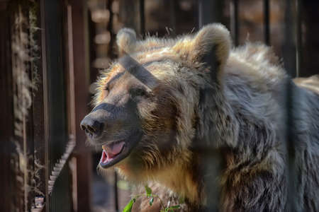 brown bear in a cage in summer Stock Photo