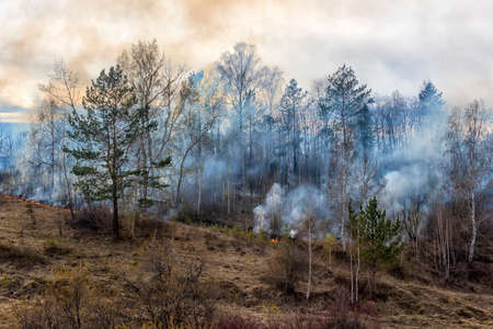 Burning forest in Siberia Stock Photo