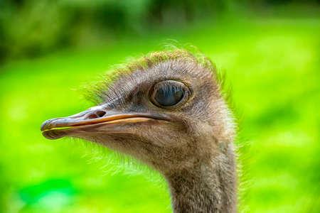 close-up portrait of an ostrich Banco de Imagens