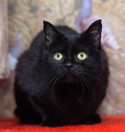 sad black cat with yellow eyes