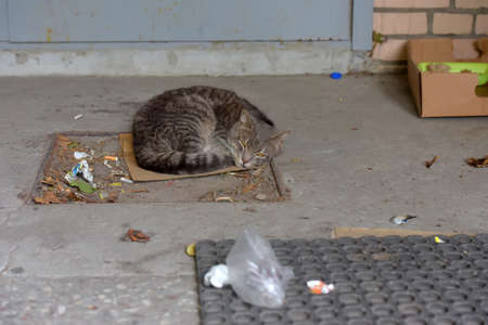 gray homeless unhappy cat sleeping on the street